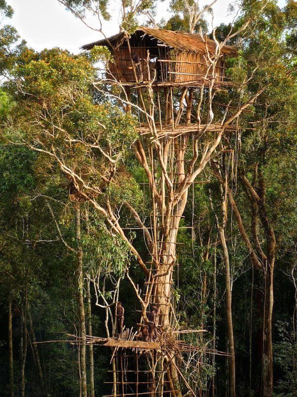 The Tree Houses of the Korowai Tribe of New Guinea | Amusing Planet