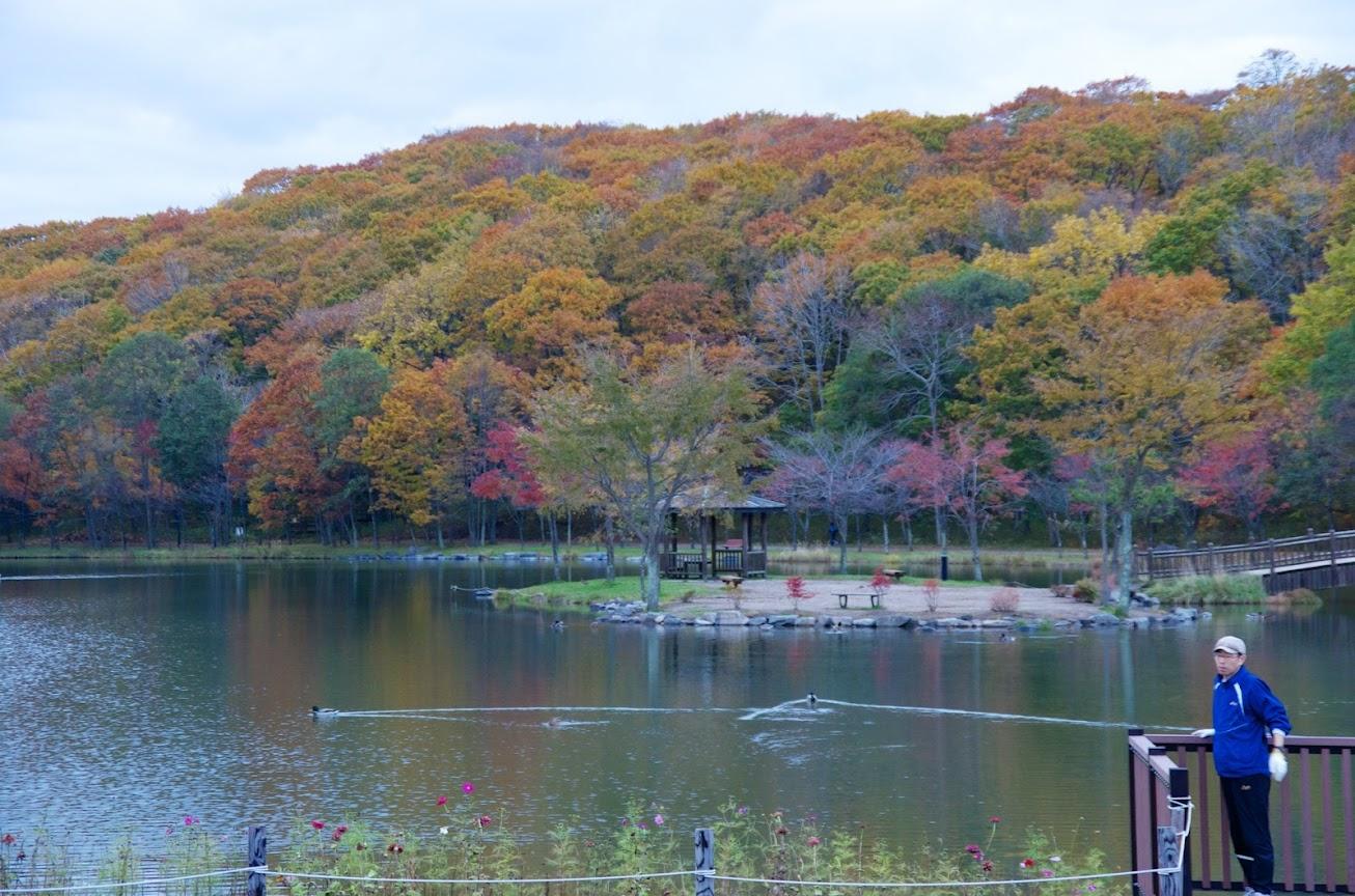 金太郎の池