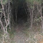 Track winding through the bush (187176)