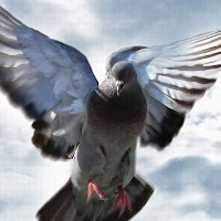 Goz David's avatar