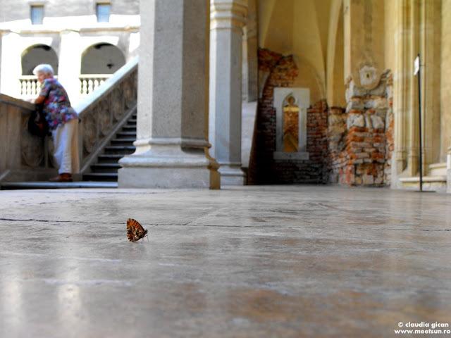 fluturasul de la castel