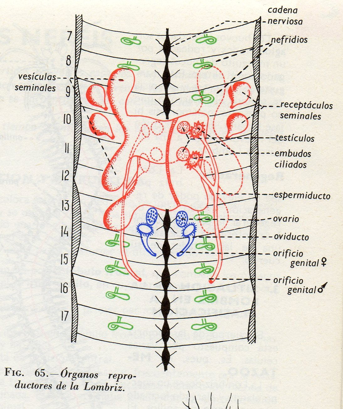 Biología Orvalle: 2º ESO