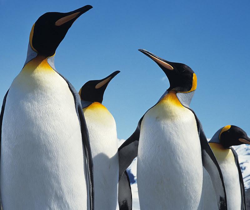 https://lh5.googleusercontent.com/-1Tux8z5KN5I/UKYOBeC4GsI/AAAAAAAAAv4/6lBaTpLUqaA/s800/penguin-wallpaper-1.jpg