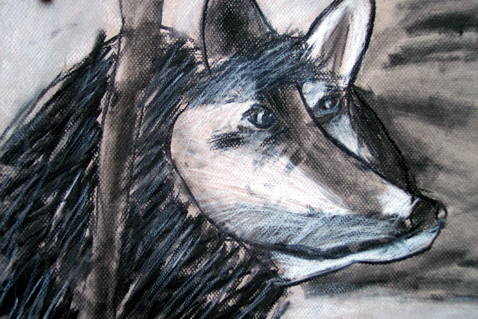Wolf Head In Charcoal By Brian, Age 9 Drawing A Wolf Dreamcatcher How To