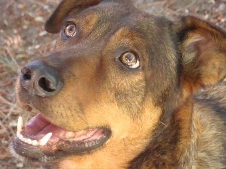 Cedar (my dog)