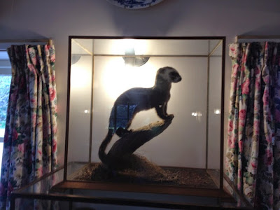 stuffed polecat in glass case