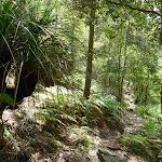 Rocky track beside Sams Creek (331319)