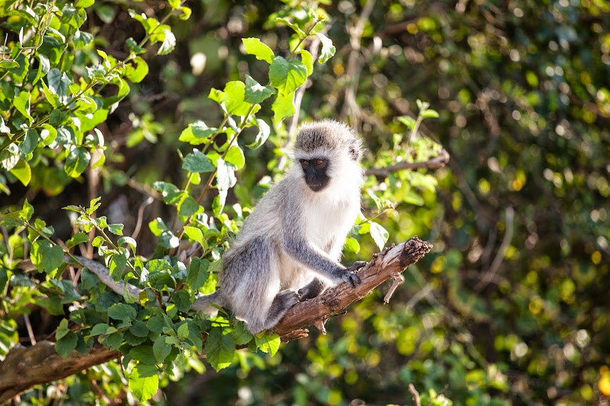 Кения, Танзания, Килиманджаро, Занзибар, осень 2014. Фото