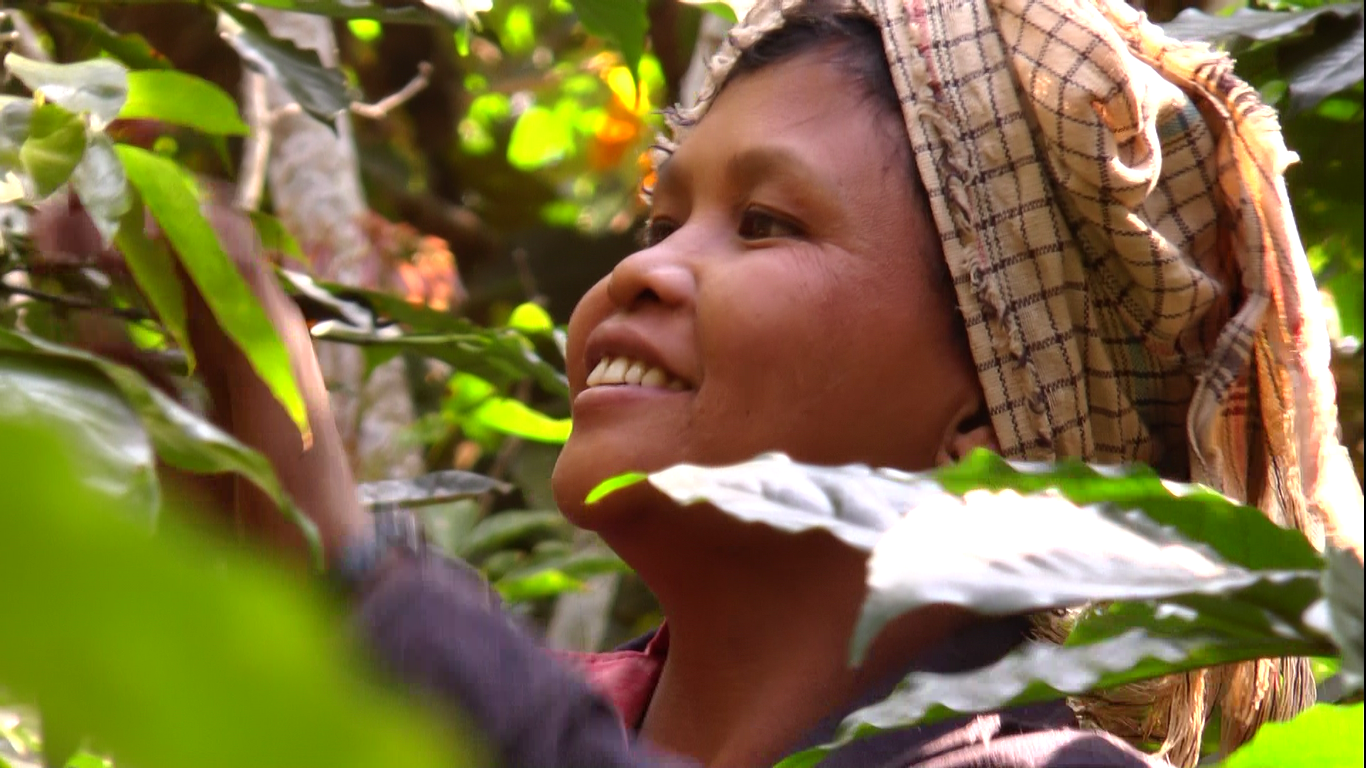 Woman Picking Coffee 2.png