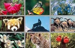 keanekaragaman hayati Keanekaragaman hayati (biodiversitas)