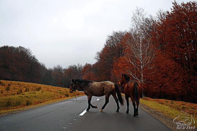 cai tinutul secuiesc
