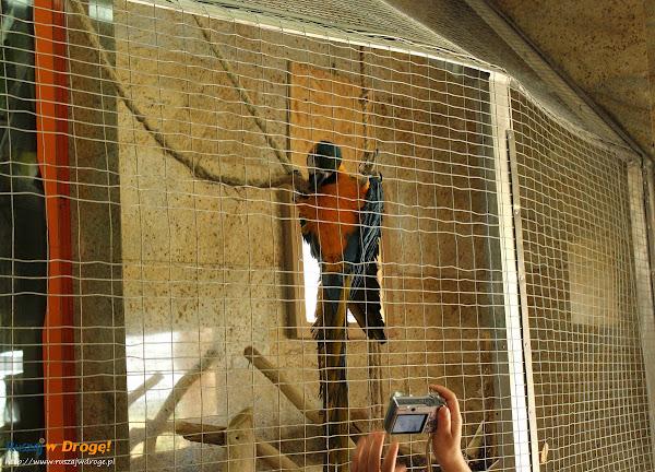 Tuchlino Park Egzotycznych Zwierzaków - Papuga Ara