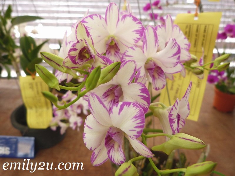 orchid competition