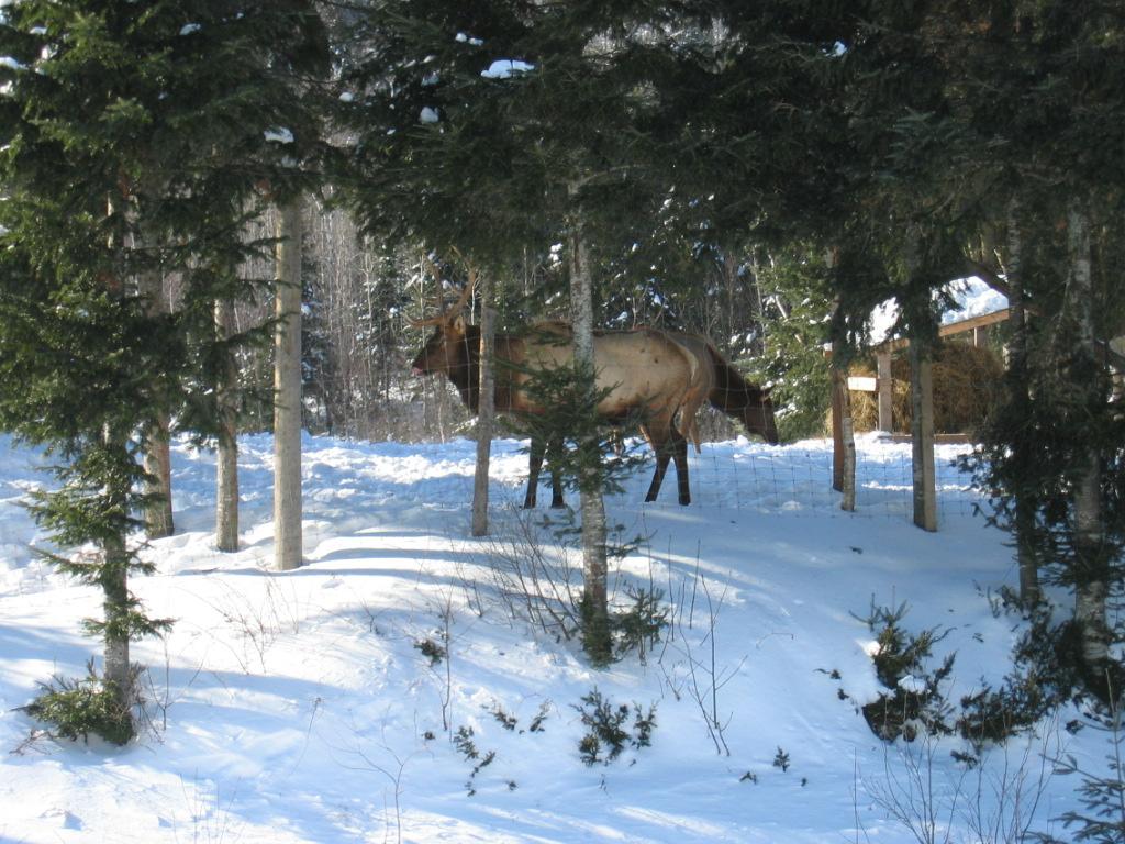 photo Canada.Janvier2008%20045