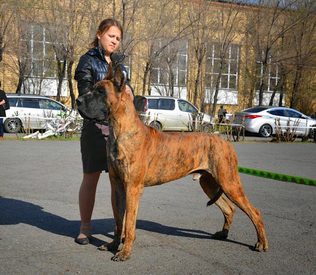 Кубок Аризоны-14(ПК)+ЧРКФ, Красноярск, 27 апреля 2014 DSC_5823