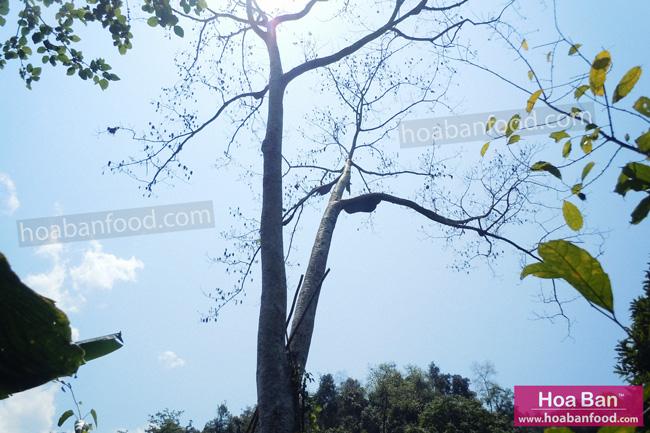 đi tìm mật ong rừng 04/2013 - 16