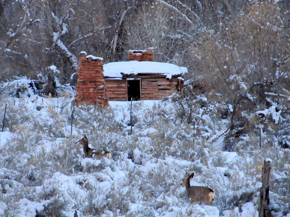 Deer and an old cabin
