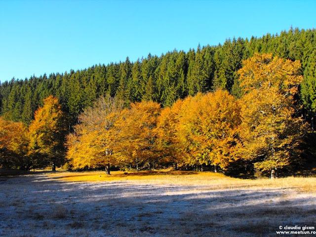 bruma alba, stejari galbeni, brazii mereu verzi