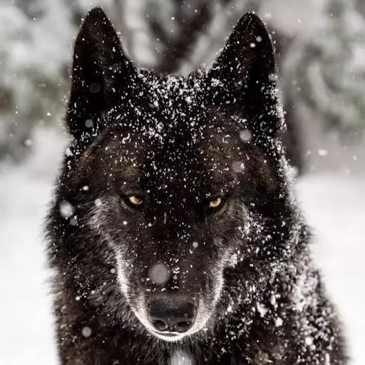 Pedro4.0