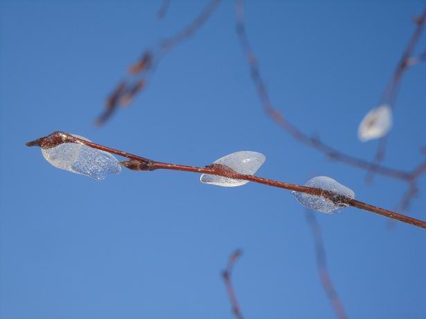 фотографии зима