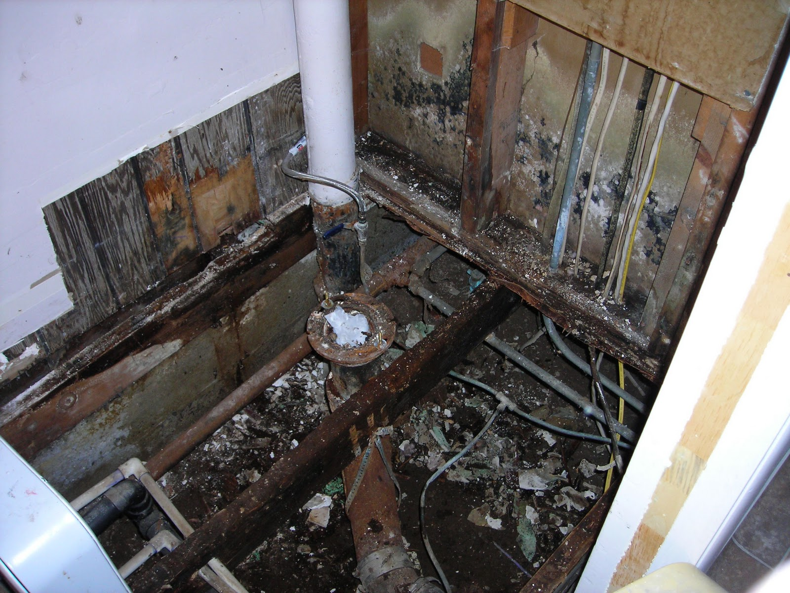 My dear watson fungus in the bathroom - Picture of black mold in bathrooms ...