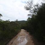 Continuing through the bush (121120)