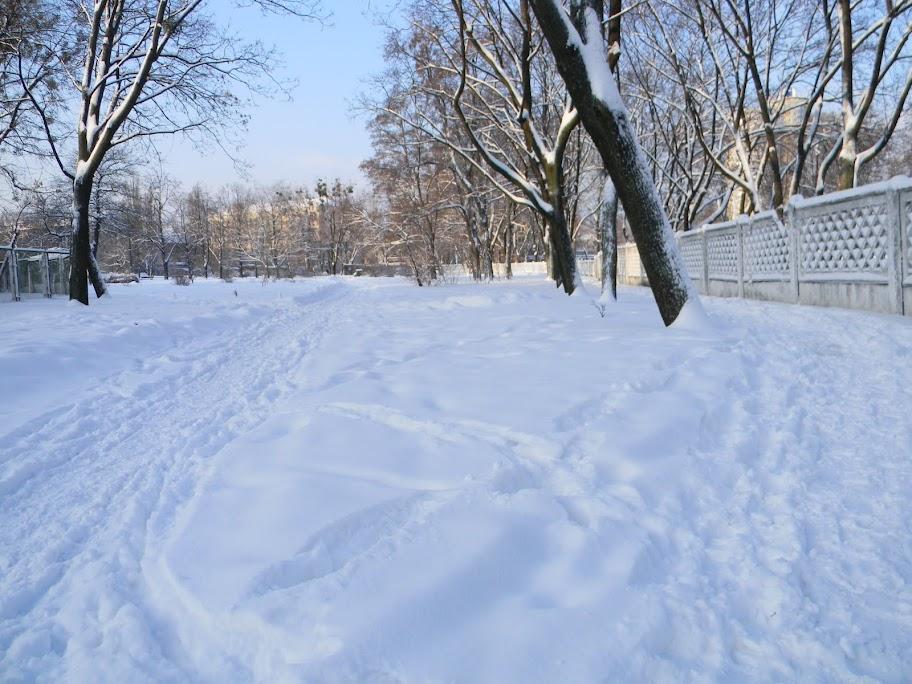 Картинки по запросу фото свежевыпавший снег