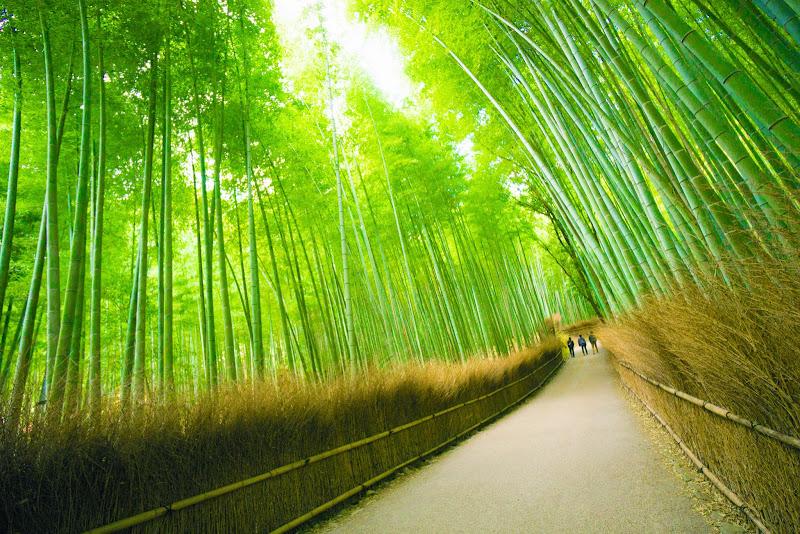 京都 竹林の道 写真3