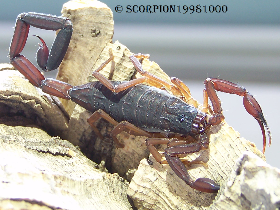 This forum is in dire need of scorpification! 5