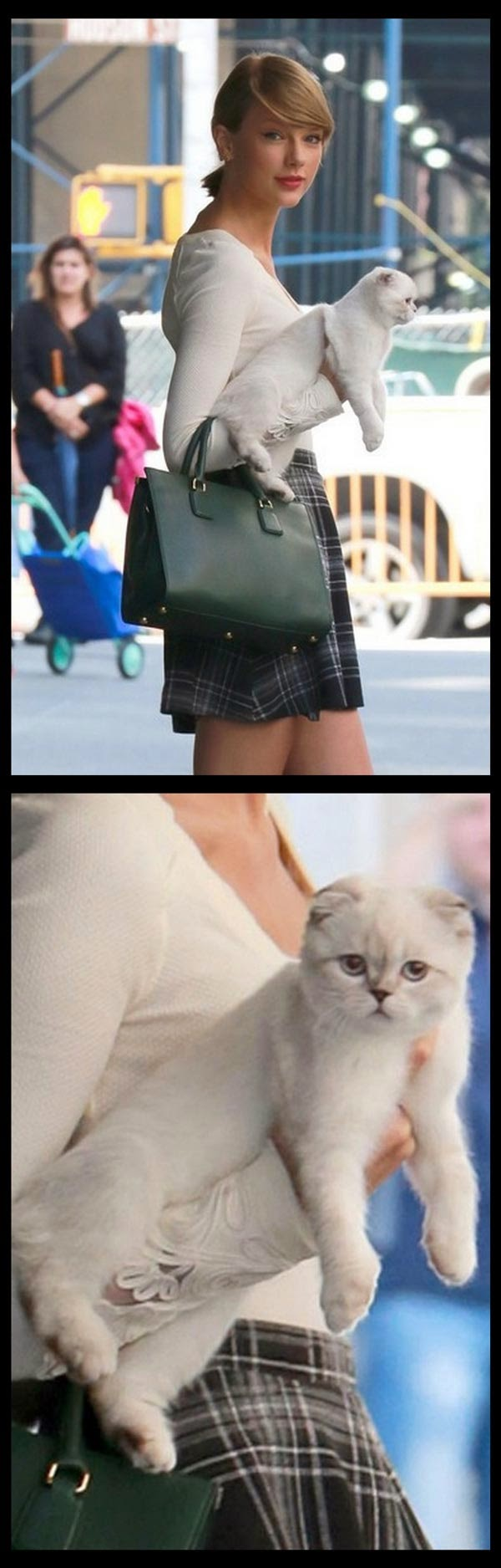Imutnya Meredith, Kucing Lucu Peliharaan Taylor Swift