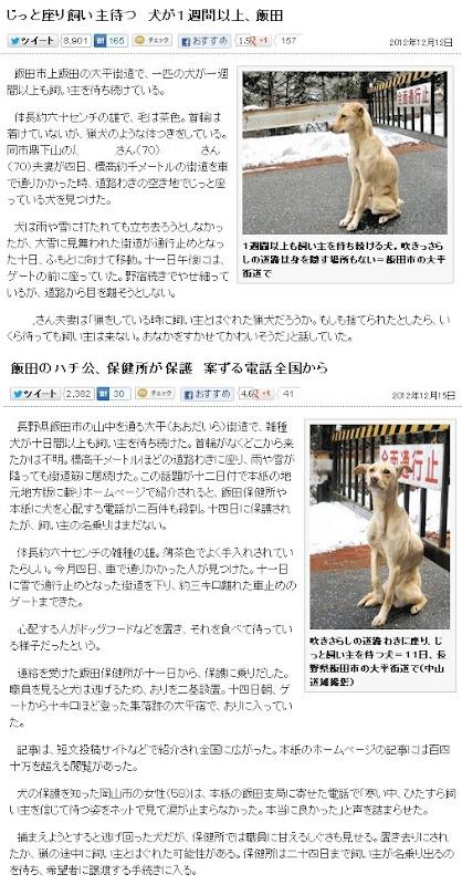 飯田のハチ公を保健所が無事保護。24日までに飼い主が名乗り出なければ、希望者に譲渡