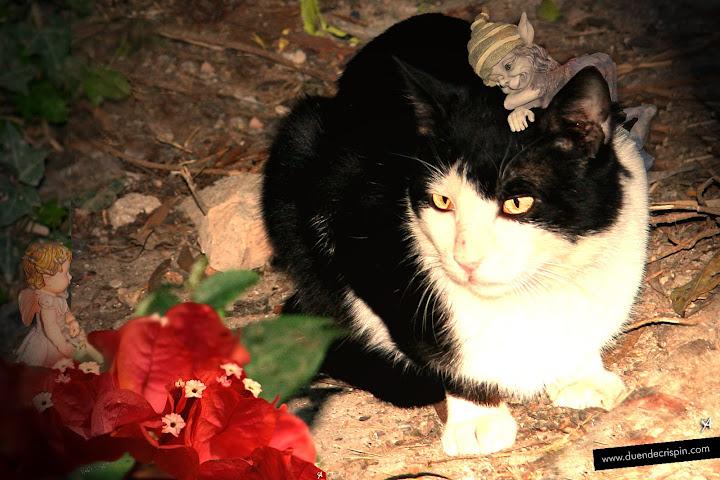 Álbum de fotos de hadas y duendes: Gatos, duendes y hadas