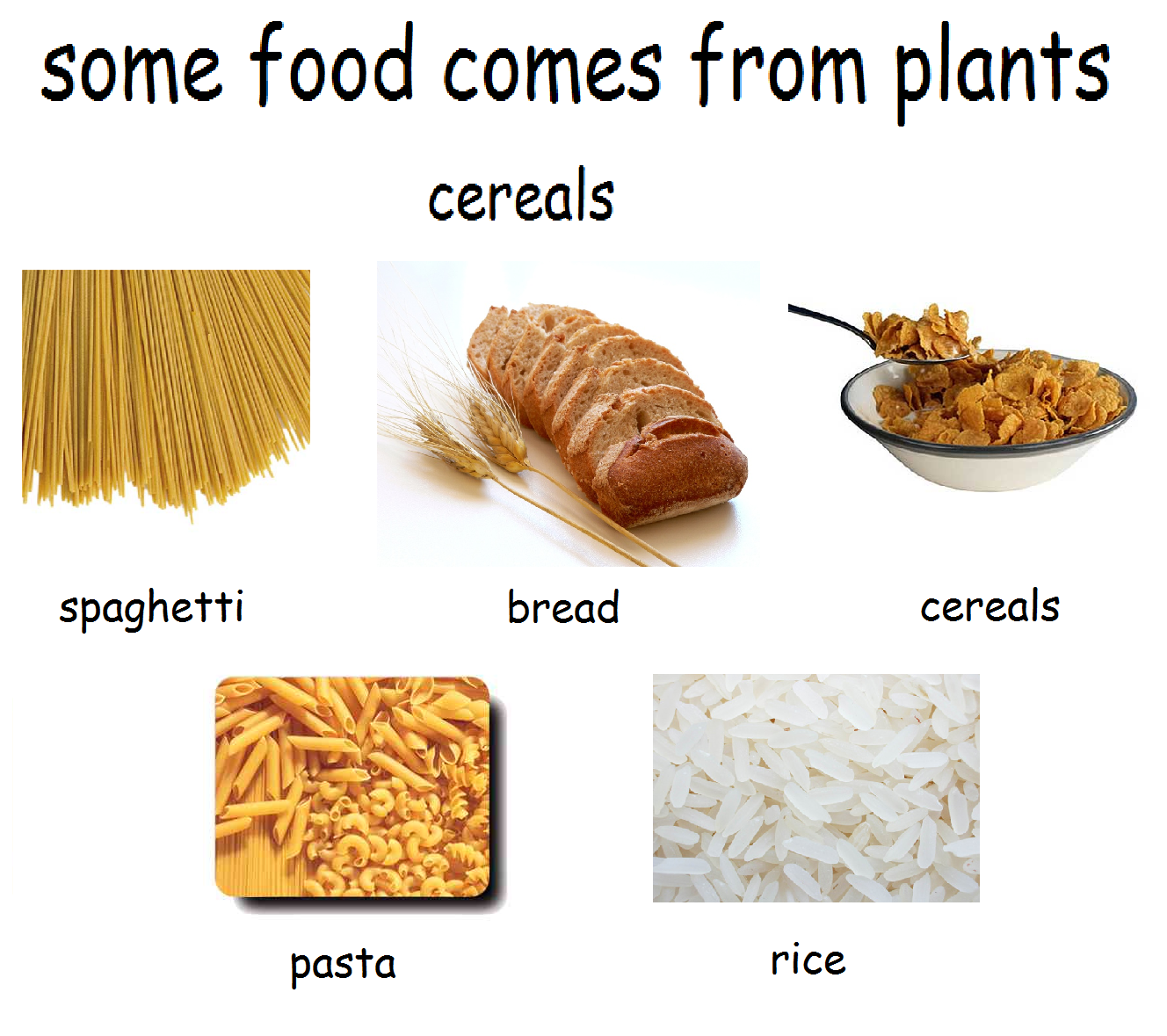 Food From Animals And Food From Plants on Dry Bones 2