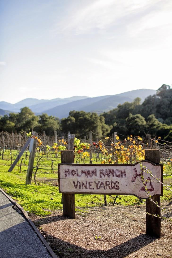 Holman Ranch Vineyard in Carmel Valley California.