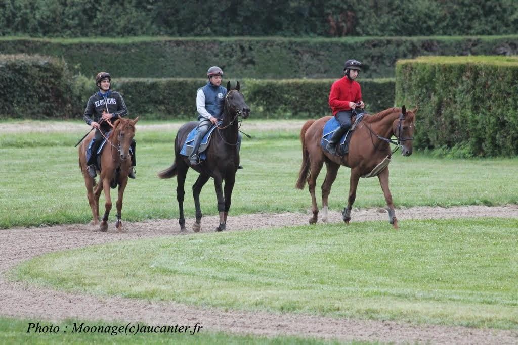 Photos Lamorlaye entrainement obstacle 14-08-2014 IMG_2901