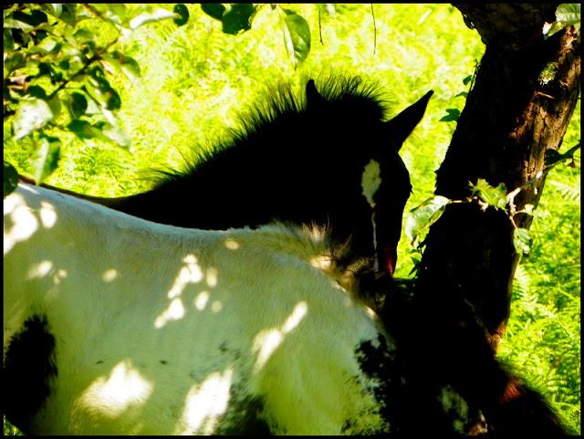 """""""NokotaSpirit"""", l'élevage...Des nouvelles ! - Page 3 Brindillebis"""