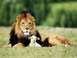 león y cordero