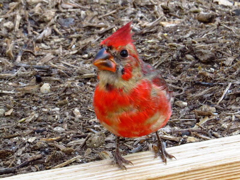 cardinal09252014-2.jpg