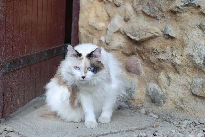 Perdu mon chat sur Tullins DSC_4264