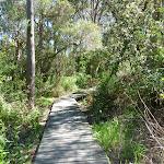 Board walk winding through the bush (337777)