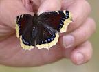 Les excursions entomologiques ALF 2014