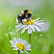 К чему снится много пчел?