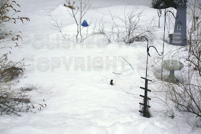 Picture of chipmunk sitting in snow looking around