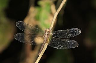ecotours Nicaragua