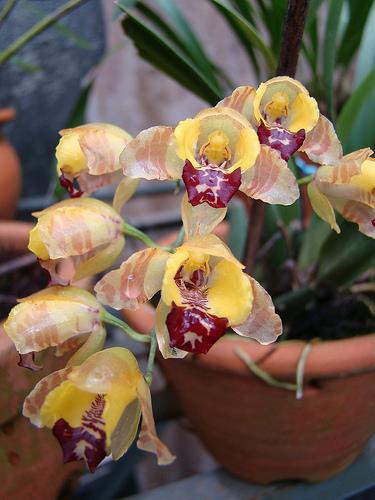 Растения из Тюмени. Краткий обзор 3429472427_478cd855de