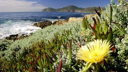 Cape Peninsula National Park, Cape Town, South Africa.jpg