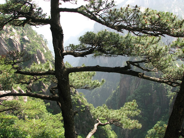 Morning in Huangshan
