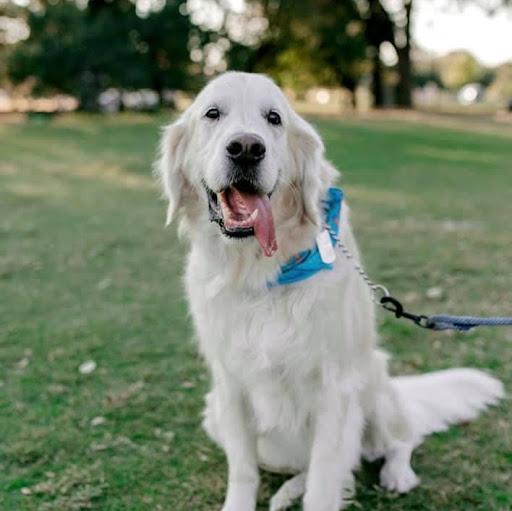 John Palombo