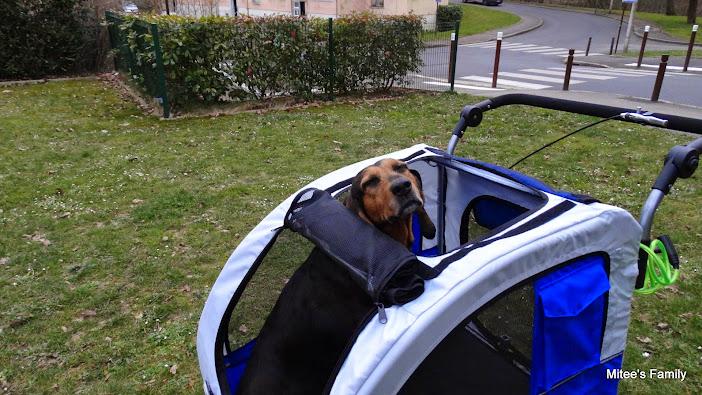 Modes de transport pour petits / vieux chiens qui fatiguent vite - Page 3 DSC02417