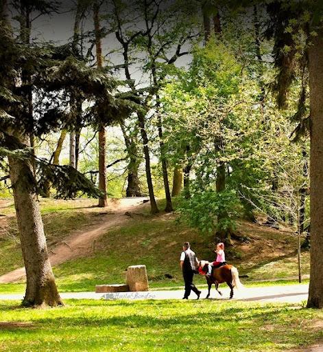 plimbare ponei parcul de sub arini sibiu